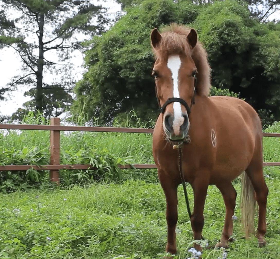 Ternyata Musik Bisa Menjadi Bagian Dari Perawatan Kuda Balap